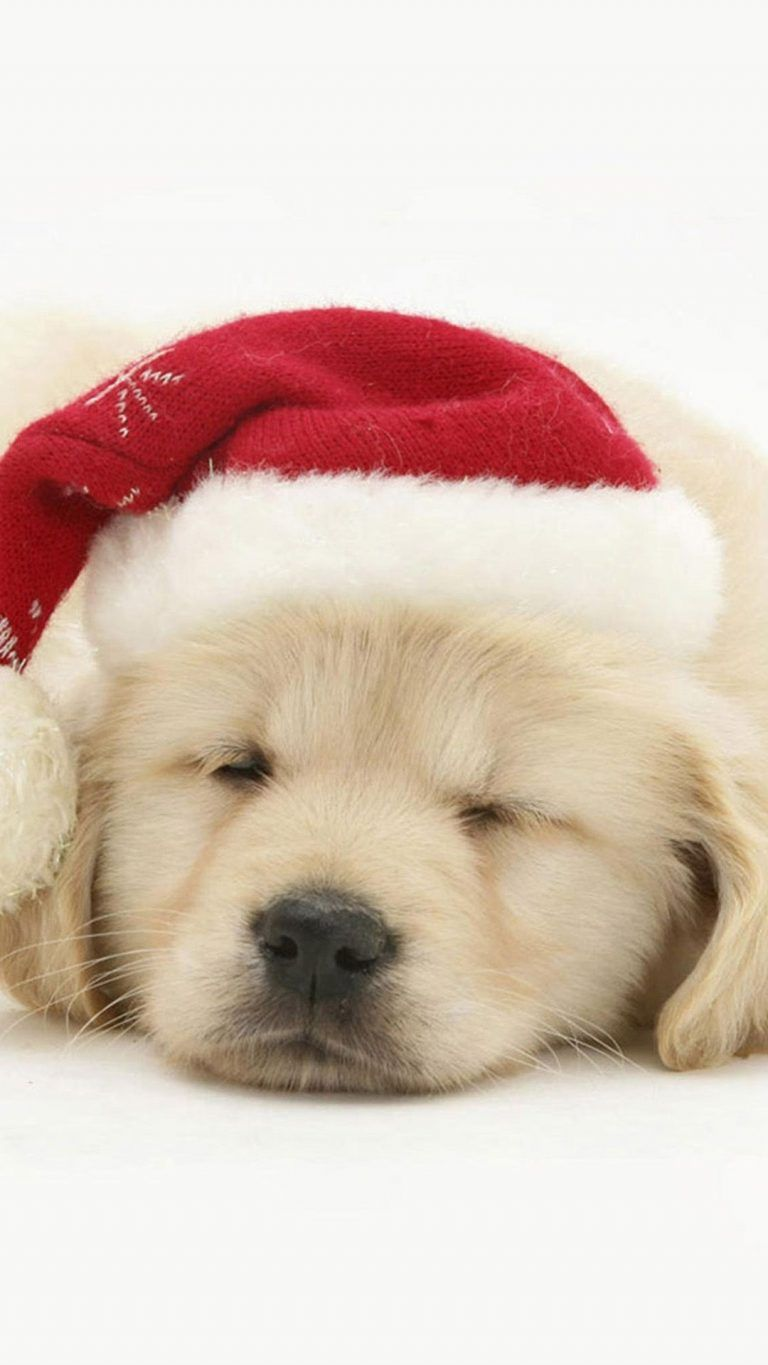 Cute Puppy In Christmas Hat Iphone 6 Wallpaper Christmas Wallpaper Puppy Backgrounds Cute Dog Wallpaper Puppy Wallpaper Iphone