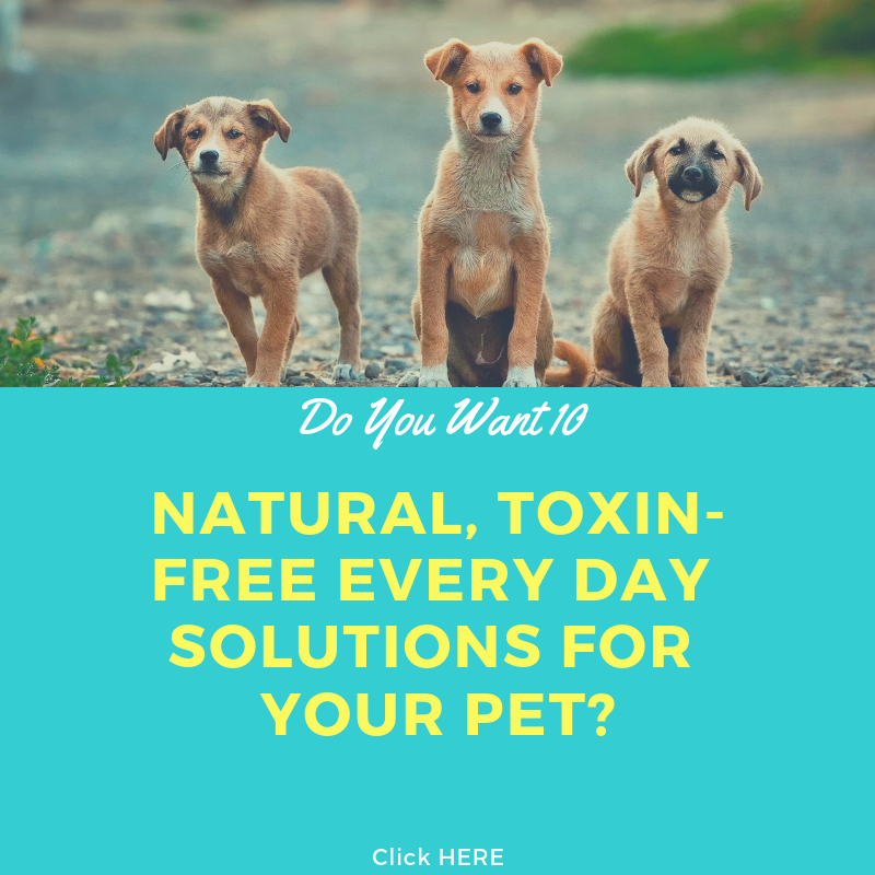 If You Are Interested In Learning Natural And Toxin Free Ways Of Daily Life For Your Beloved Pet Click The Picture Pets Training Your Dog Dog Bite Prevention
