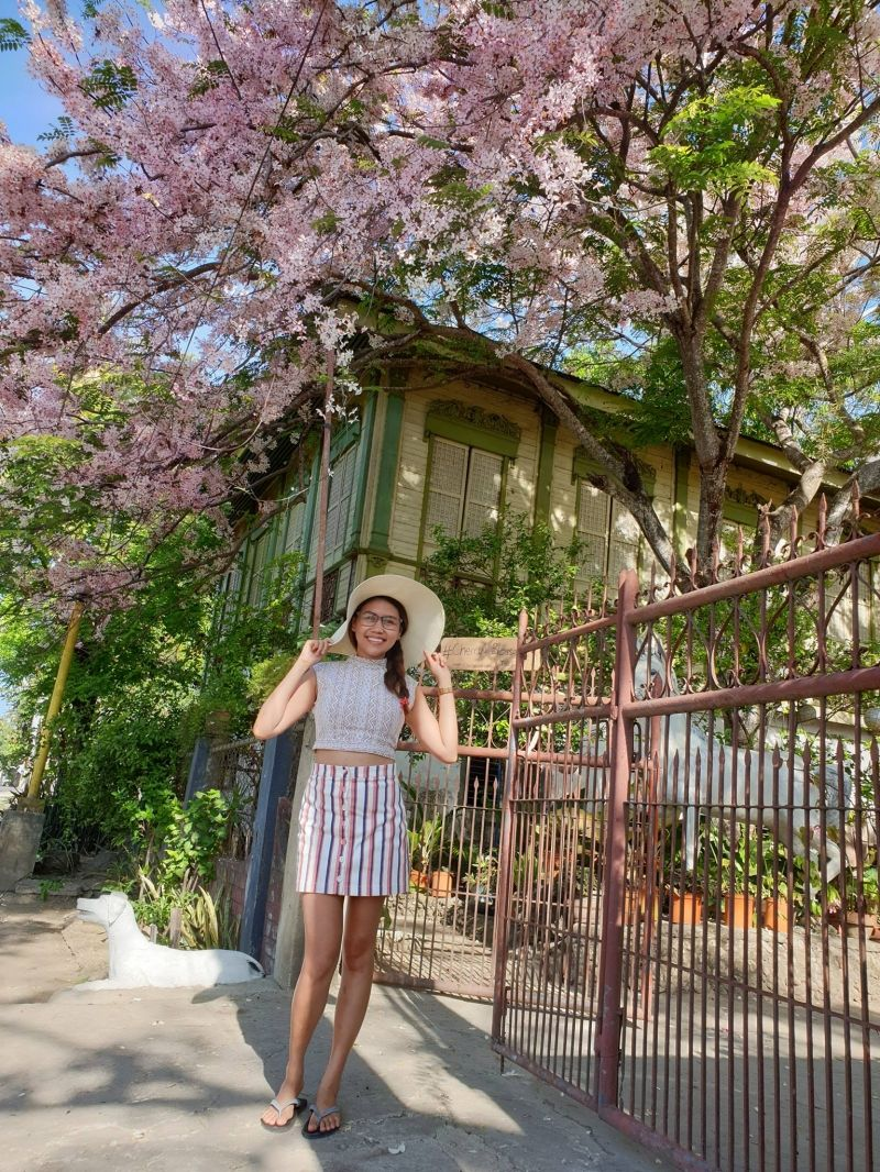 Cherry Blossoms In The Philippines Where To Find Them And More Cherry Blossom Backyard Trees Flowering Trees