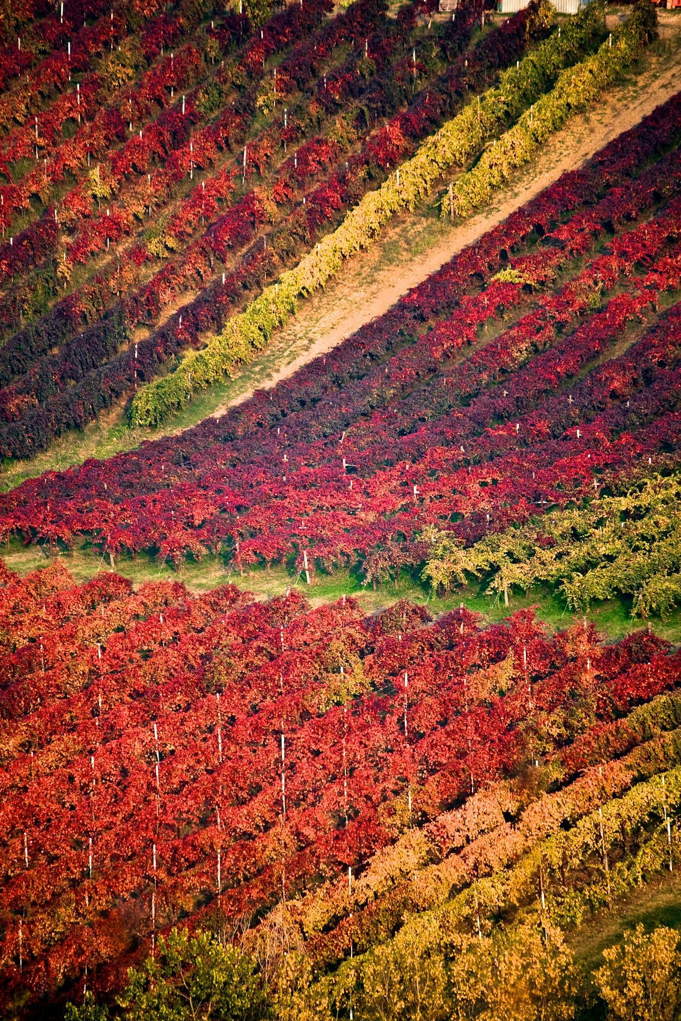 Where To Eat What To See What To Visit And Where To Sleep In Italy The Best Italy Tips To Read In Themonsyeursjournal Com Vineyard Italy Scenery
