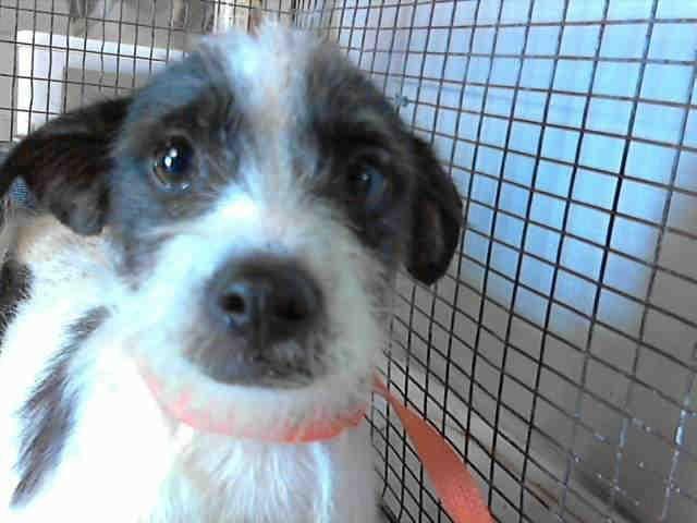 A468826 Urgent On 7 15 San Bernardino Urgent Dogs From