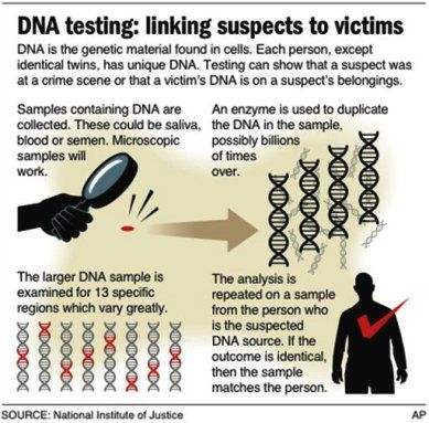 """dna and crime We are pleased to add another piece to our curriculum, """"dna and crime"""" this lesson highlights one of the more controversial aspects of the use of dna in forensics – familial searching in our experience, this subject is one students are drawn to."""