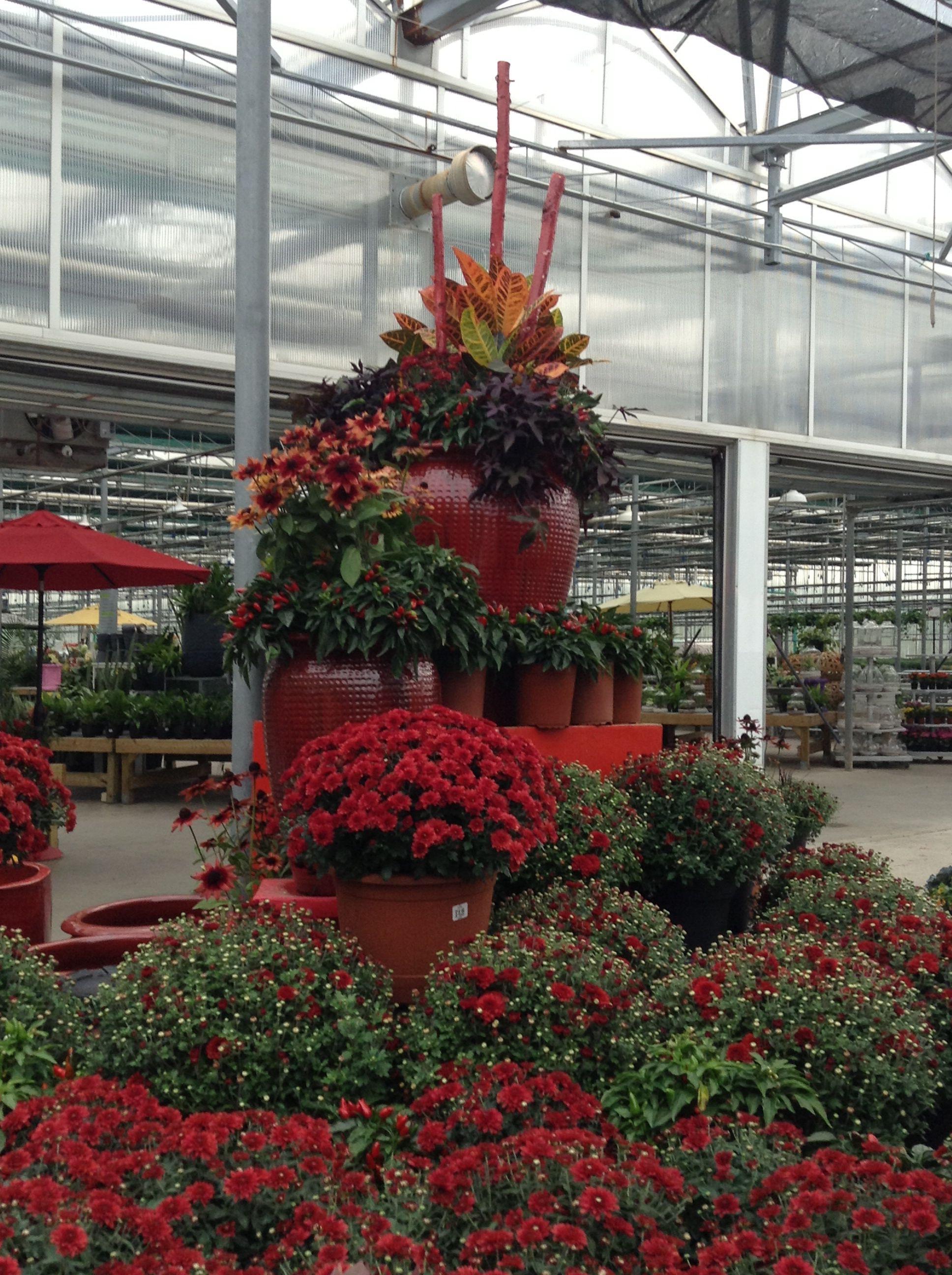 Hot Red Planters Growing herbs indoors, Plant nursery