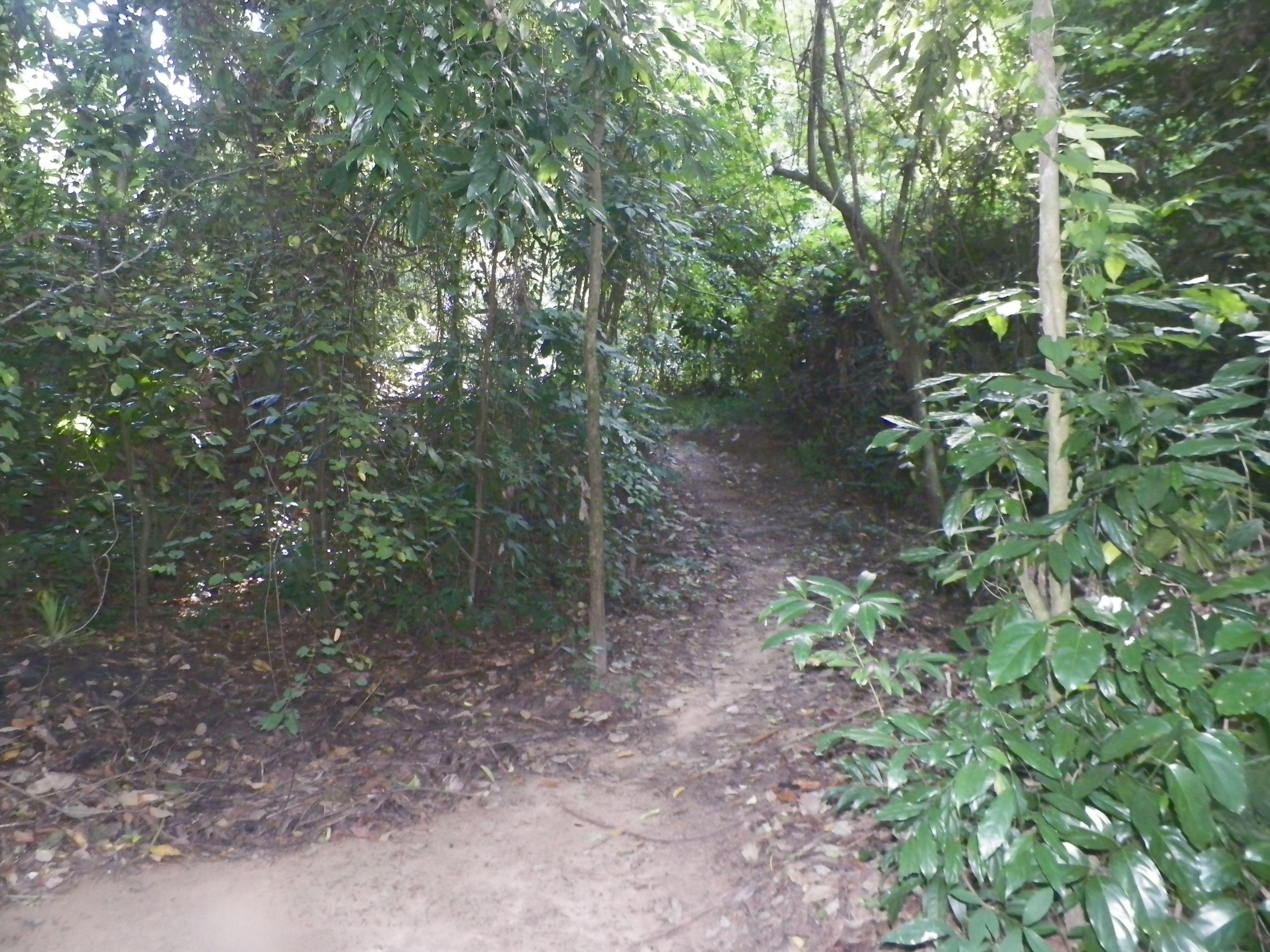 Vietnam: deel Ho Chi Minh trail
