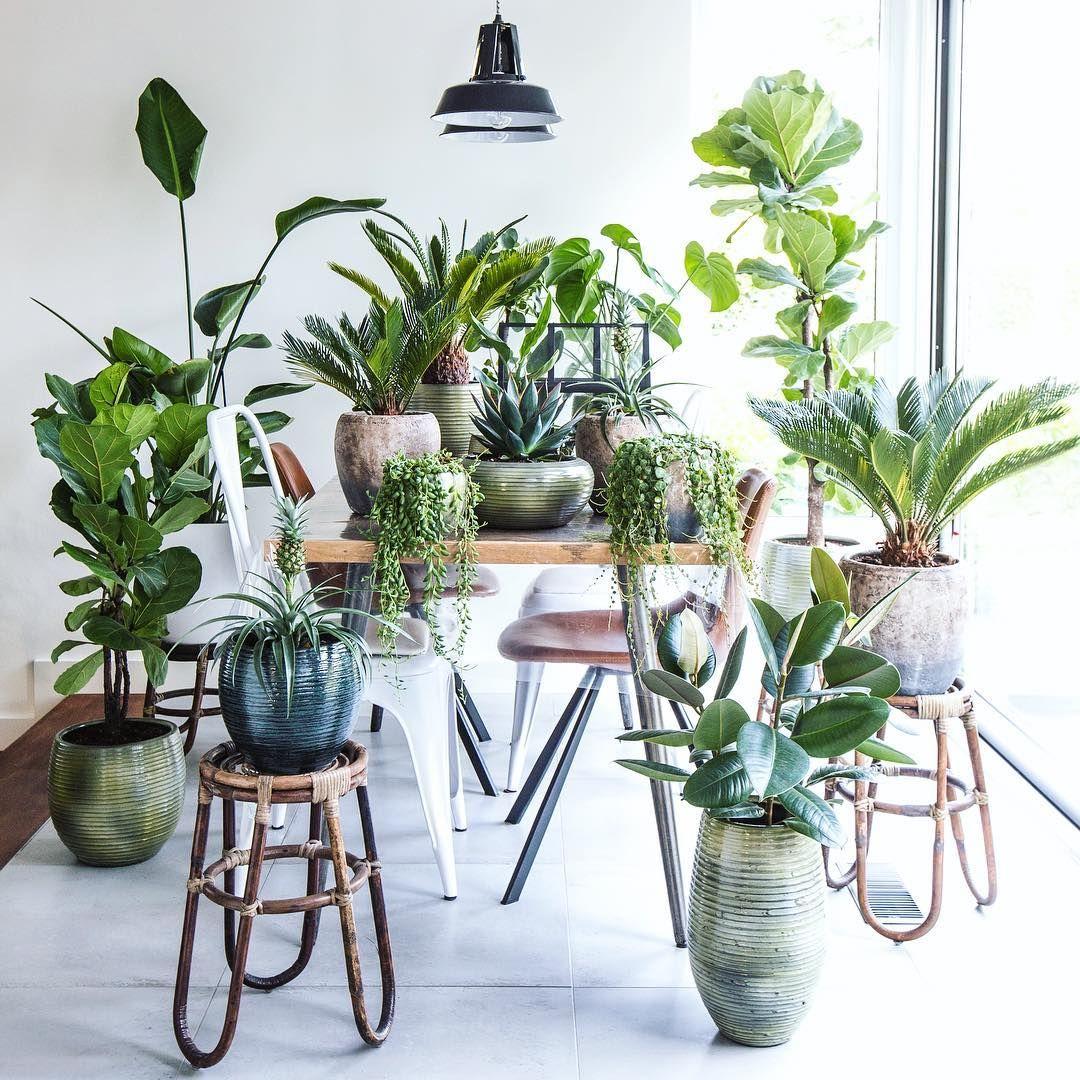 Where do we eat? urbanjungle houseplants indoorplants