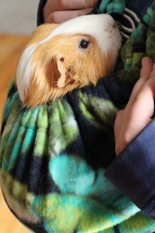 Guinea Pig Cuddle Sack Fleece Snuggle Sack Hedgehog Bonding Bag Small Animal Pouch