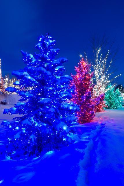 Christmas-Lights-in-Snow Christmas lights Pinterest Christmas