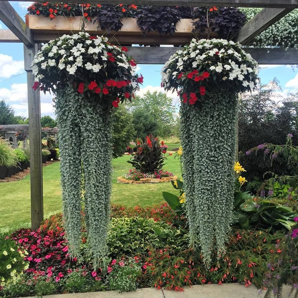 Jellyfish By Garden Answer Top Impatiens Bottom Dichondra At
