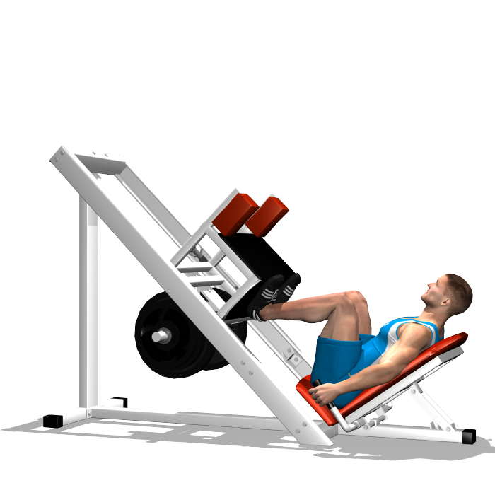 LEG PRESS 45° INVOLVED MUSCLES DURING THE TRAINING