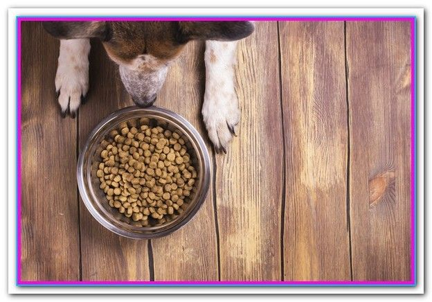 Best Dry Dog Food For Yorkies Dry Dog Food Or Wet Dog Food For