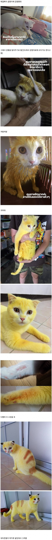 곰팡이에 감염된 고양이 2020 고양이 귀여운 동물 사진 고양이 유머