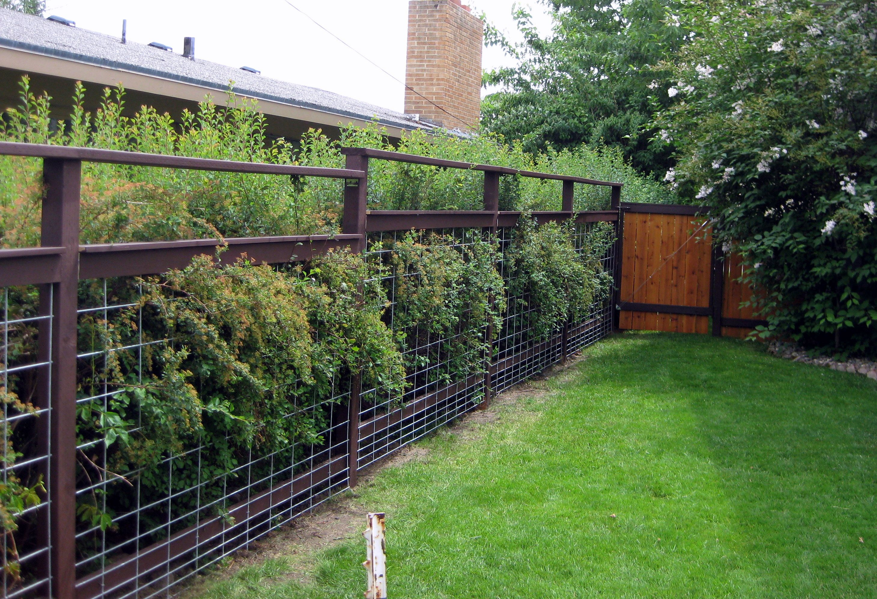 super easy dog fencing (using cattle fencing) | for the home