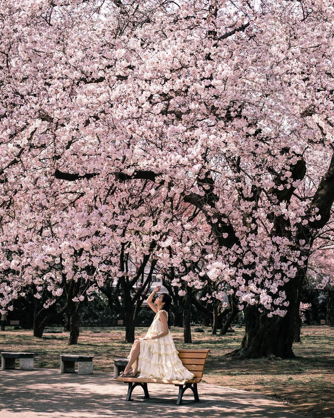 All Of The Best Spots In Tokyo To See The Cherry Blossoms In 2020 Where And When To Go The Best Pl Cherry Blossom Japan Cherry Blossom Tree Japan Photography
