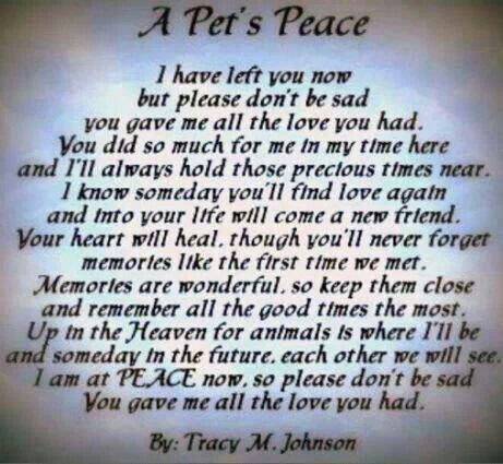 A Pet S Peace Dog Death Pet Poems Losing A Pet
