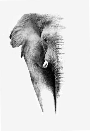 'Artistic Black And White Elephant' Print - Donvanstaden | AllPosters.com