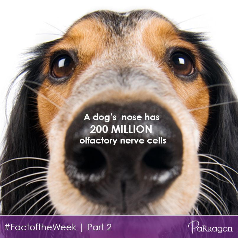 Earlier today we asked you how many olfactory nerve cells ...