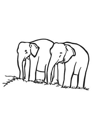 Ausmalbild Zwei Elefanten Zum Ausmalen Ausmalbilder Ausmalbilderelefanten Malvorlagen Ausmalen Schule Kinderga Ausmalen Elefanten Ausmalbild
