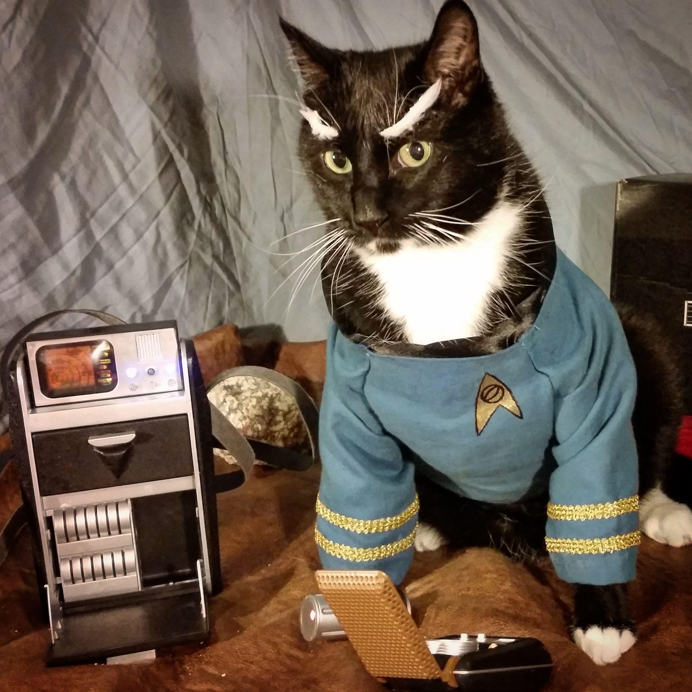 Halloween,Halloween Cat cosplay, Cat halloween costume