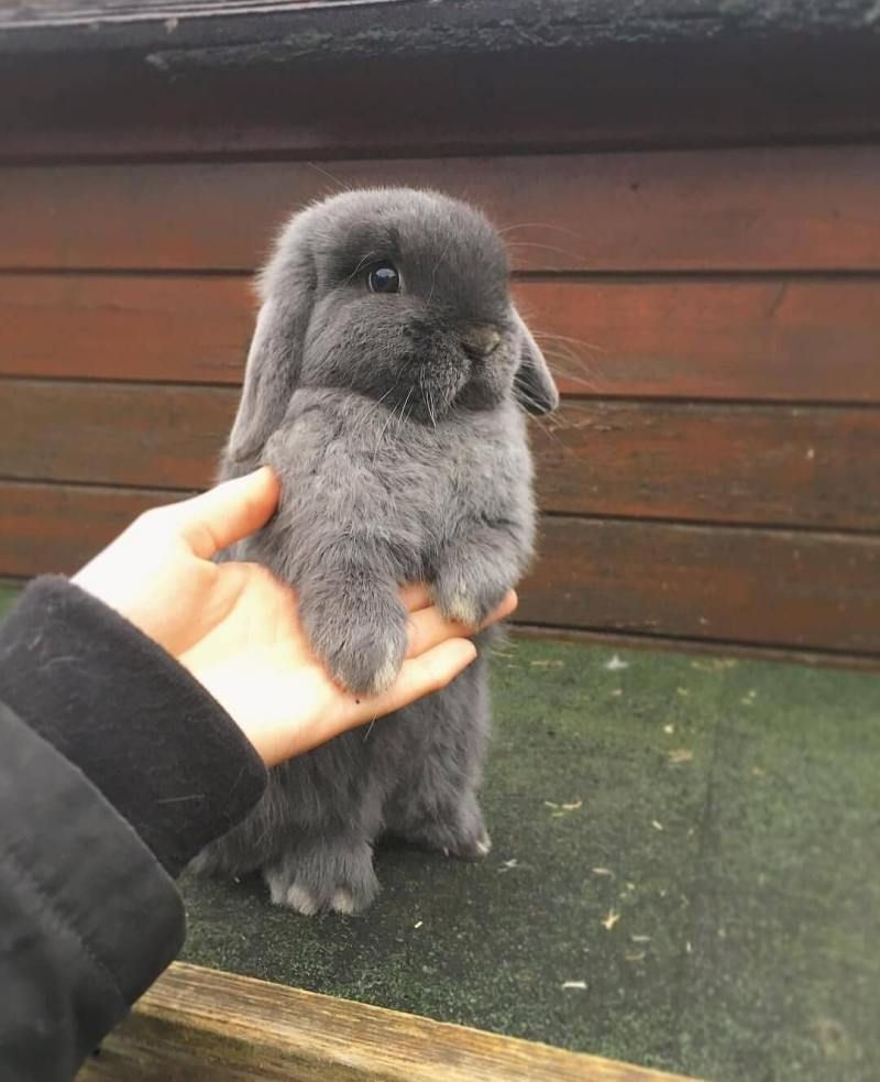 Photo of 30 cute bunny pictures you have to see today | Bunnies | Beauty | Photoshoot | All the stuff I care about