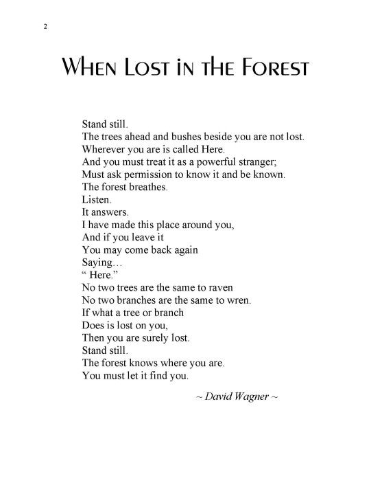Forest Poems 3