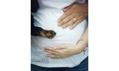 These maternity photos got so much cuter when the family dog showed up: Fur baby, meet human baby