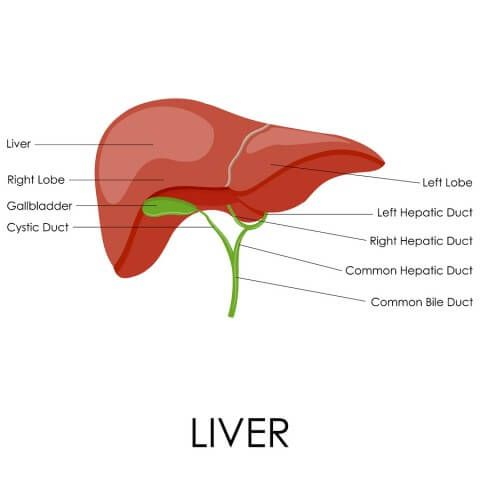 Liver cleanse detox your liver in 6 easy steps liver cleanse liver cleanse detox your liver in 6 easy steps dr axe ccuart Gallery