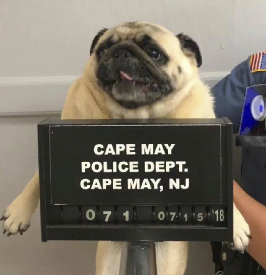 Police Post Mugshot Of Lost Dog Bail Paid In Cookies El Humor