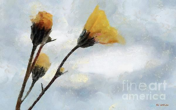 """""""Spacious Skies"""" © 2016 RC deWinter ~ There wildflowers are Desert Gold, a member of the sunflower family, which were part of the amazing superbloom in Death Valley, California in spring 2016."""