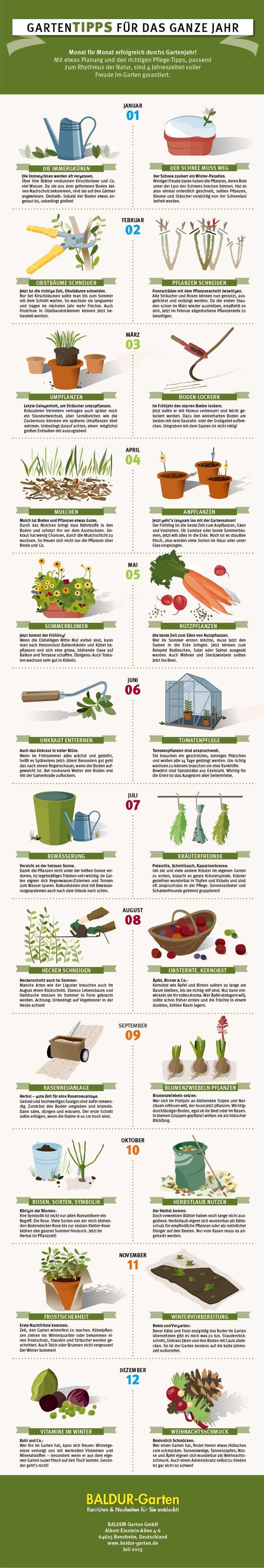 Gartenjahr als Grafik - hier geht's zu den Gartentipps