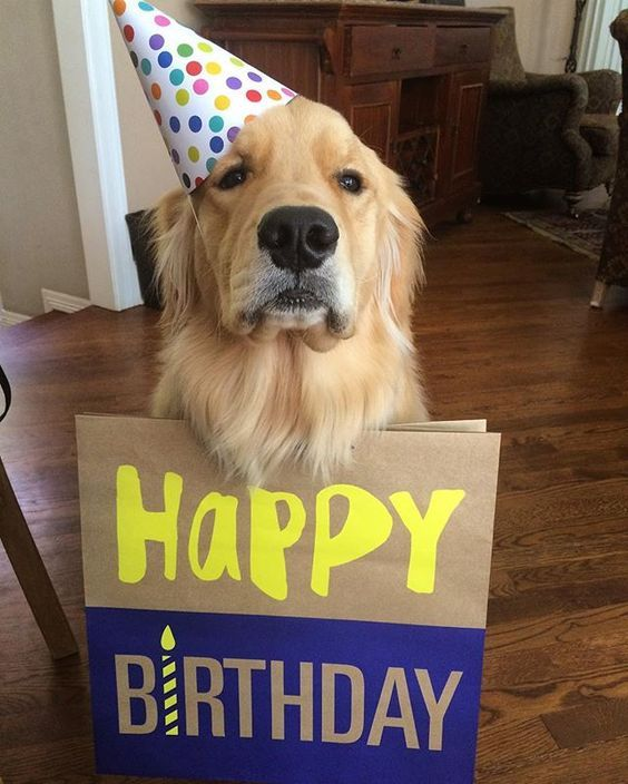Pin Auf Happy Birthday Meme