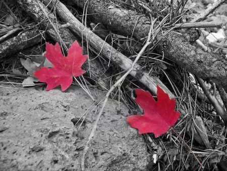 صور انستقرام ابيض واسود روعة بجودة Hd ميكساتك Autumn Leaves Black And White Image