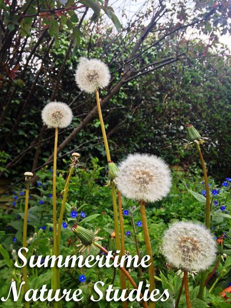 Summertime Nature Studies |The Holistic Homeschooler