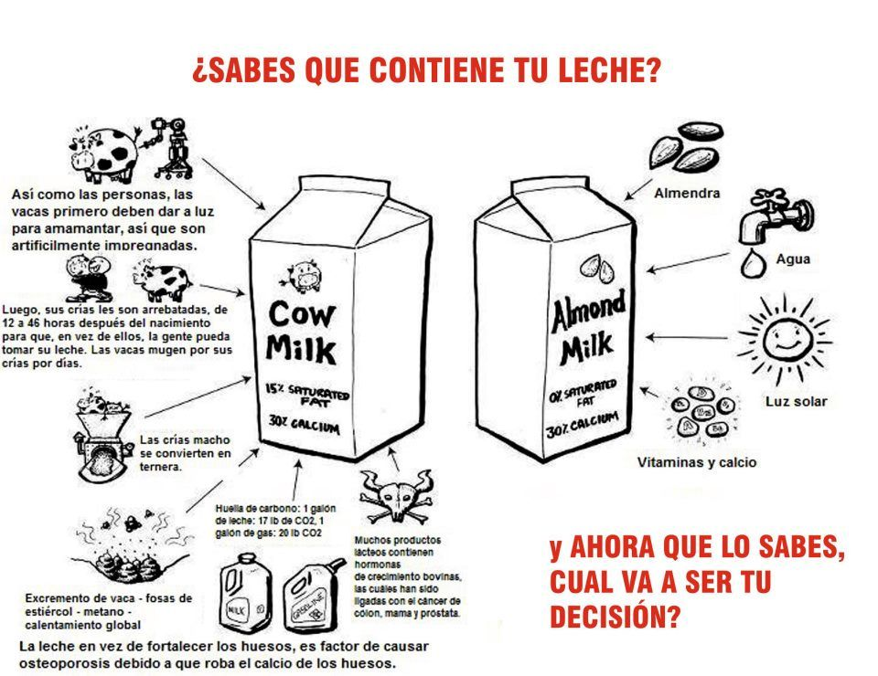 lacteos work essay Planta de lacteos-model - free download as pdf file (pdf), text file (txt) or view presentation slides online planta de lacteos para diseño.