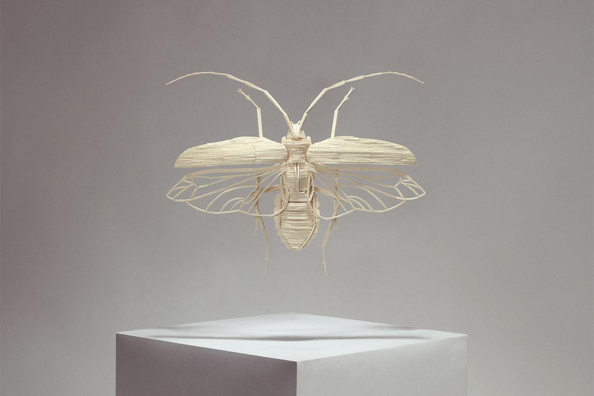 Kyle Bean - Insects made from matchsticks