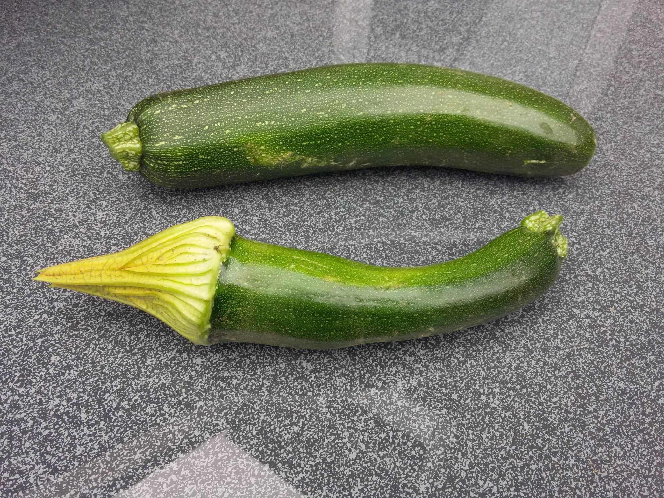 This zucchini retained its flower.
