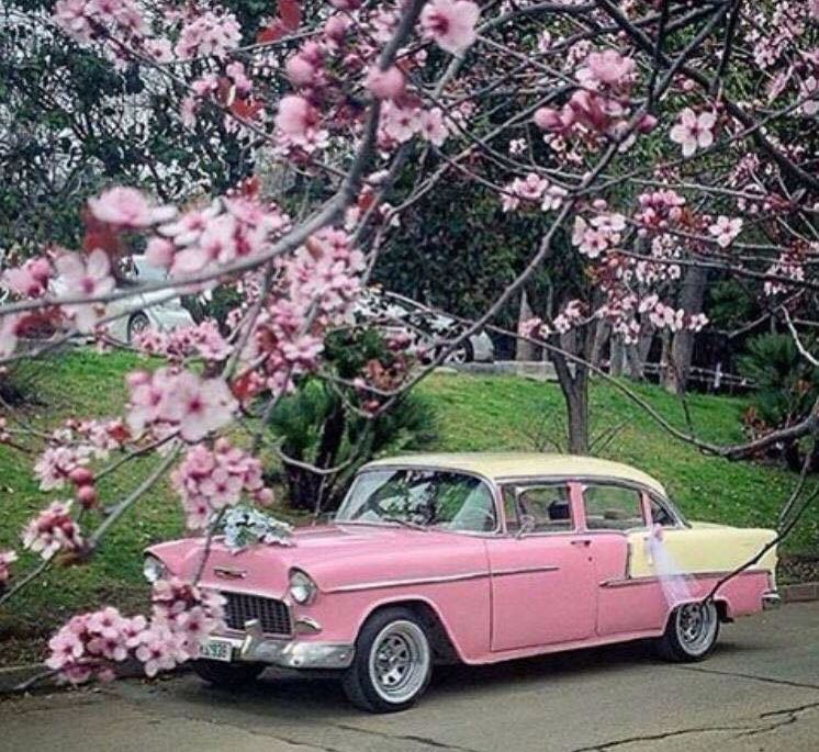 """My grandma owned this car.  She called it her """"pink lady""""!"""