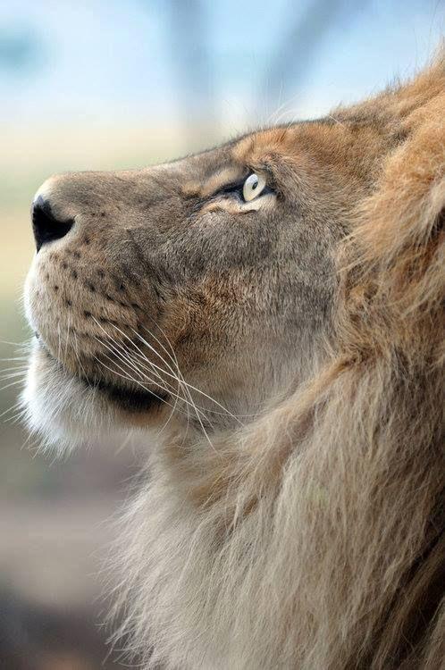 Somos Sonhadores Mesmo Rs Animais Selvagens Animais