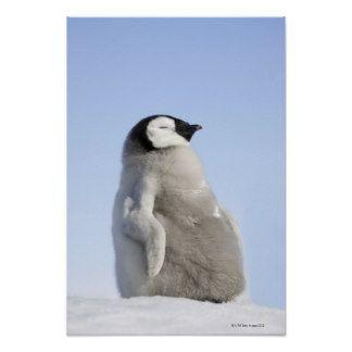 Image result for baby emperor penguin