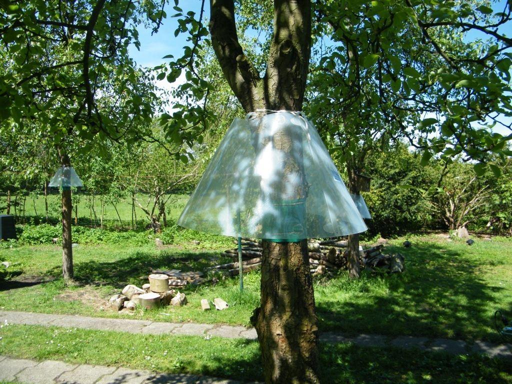 Bildergebnis Für Katzenabwehr Baum Selber Bauen