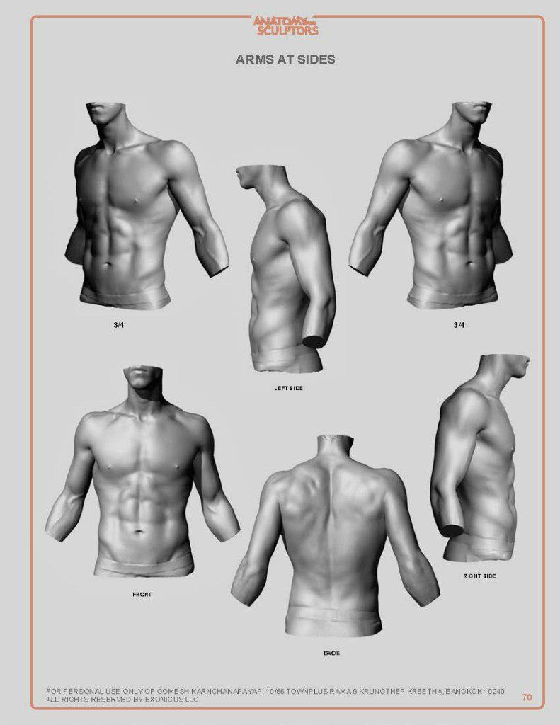 Pin von STACY LIUSHER auf anatomical drawing | Pinterest