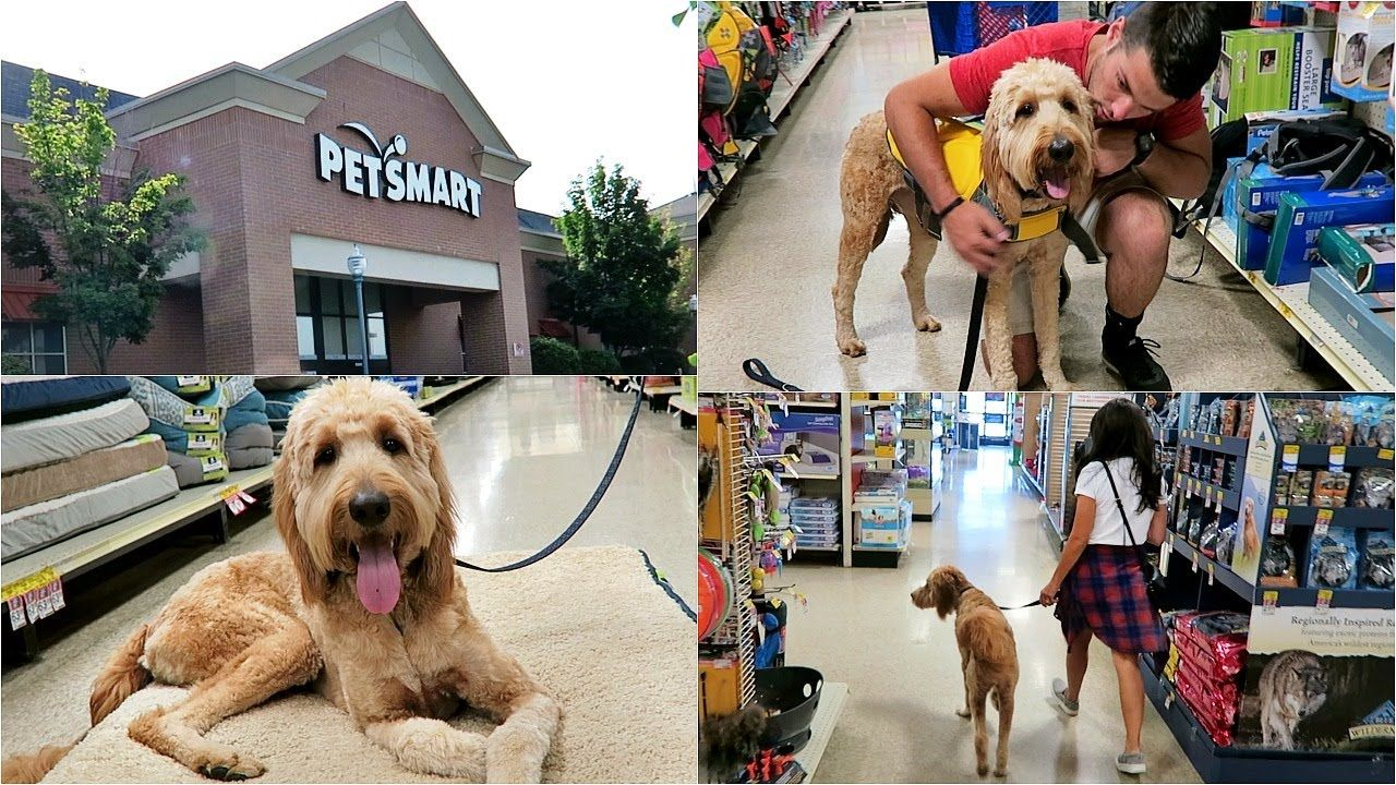 SHOP WITH ME AT PETSMART! WITH MY GOLDENDOODLE PUPPY DUDE