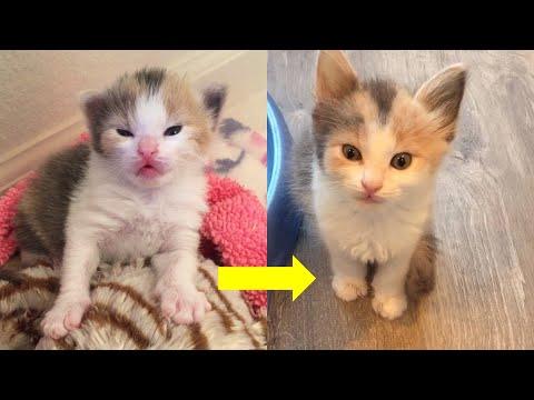Pin on Cats & Kits Start 2020