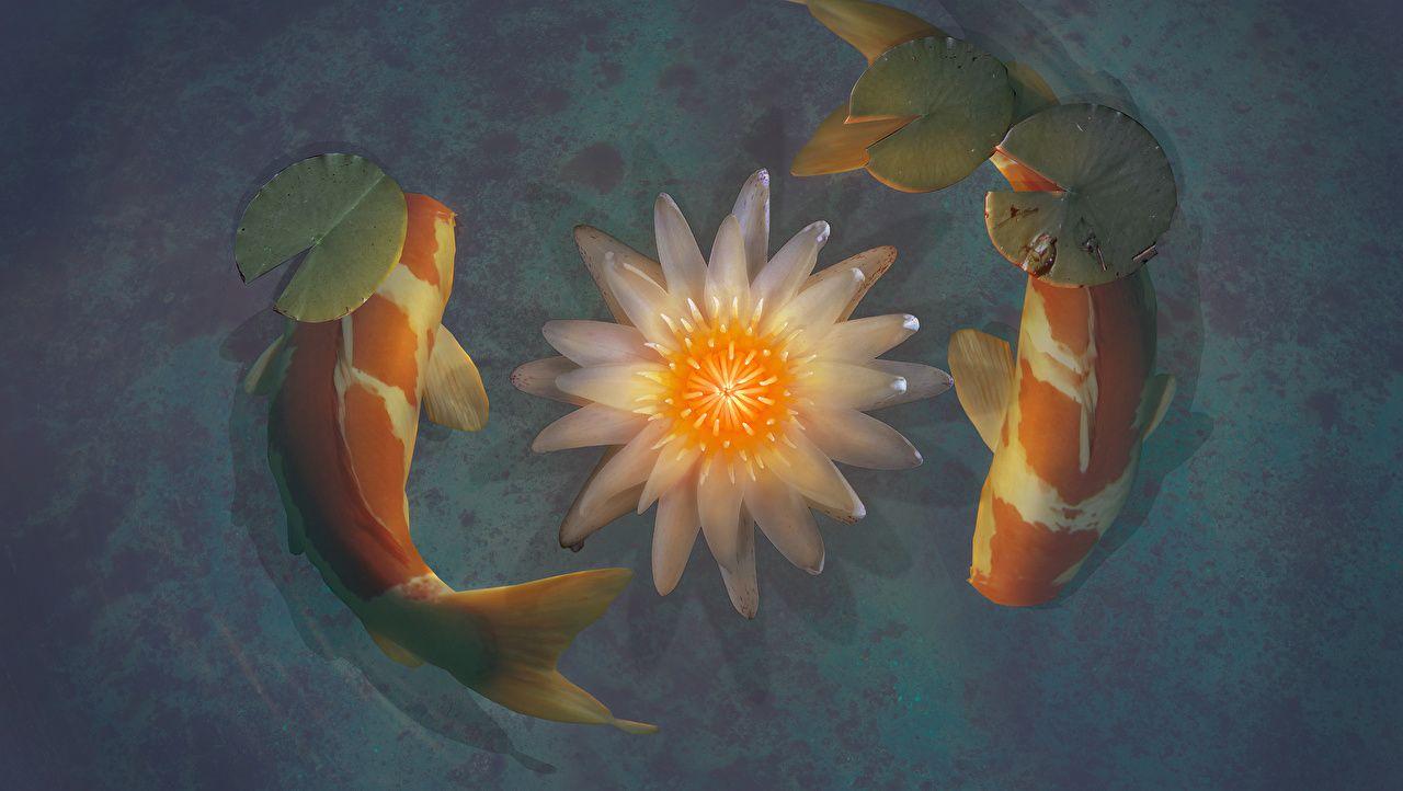 подобранная цветы картинки с рыбками слишком массивная