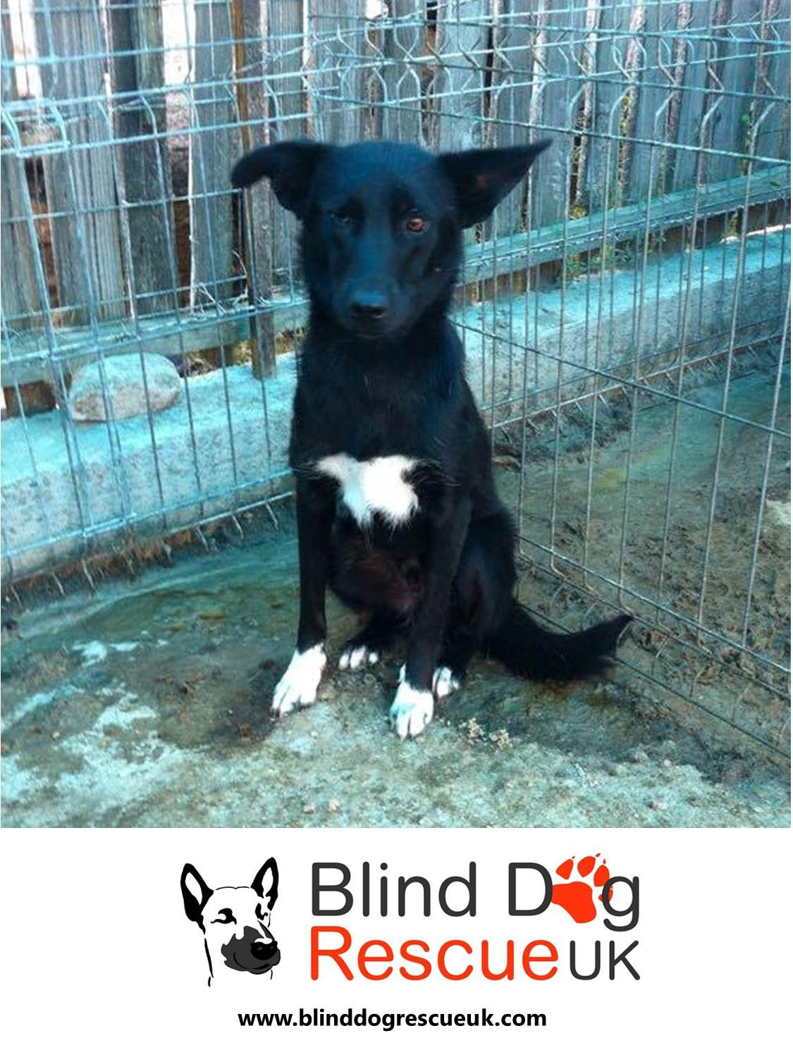 Dumbo Sat Patiently Waiting For A New Home Dumbo Is One Year Old He Is A Little Shy At First But Is Friendly And Real Dog Rescue Uk Blind Dog Dog
