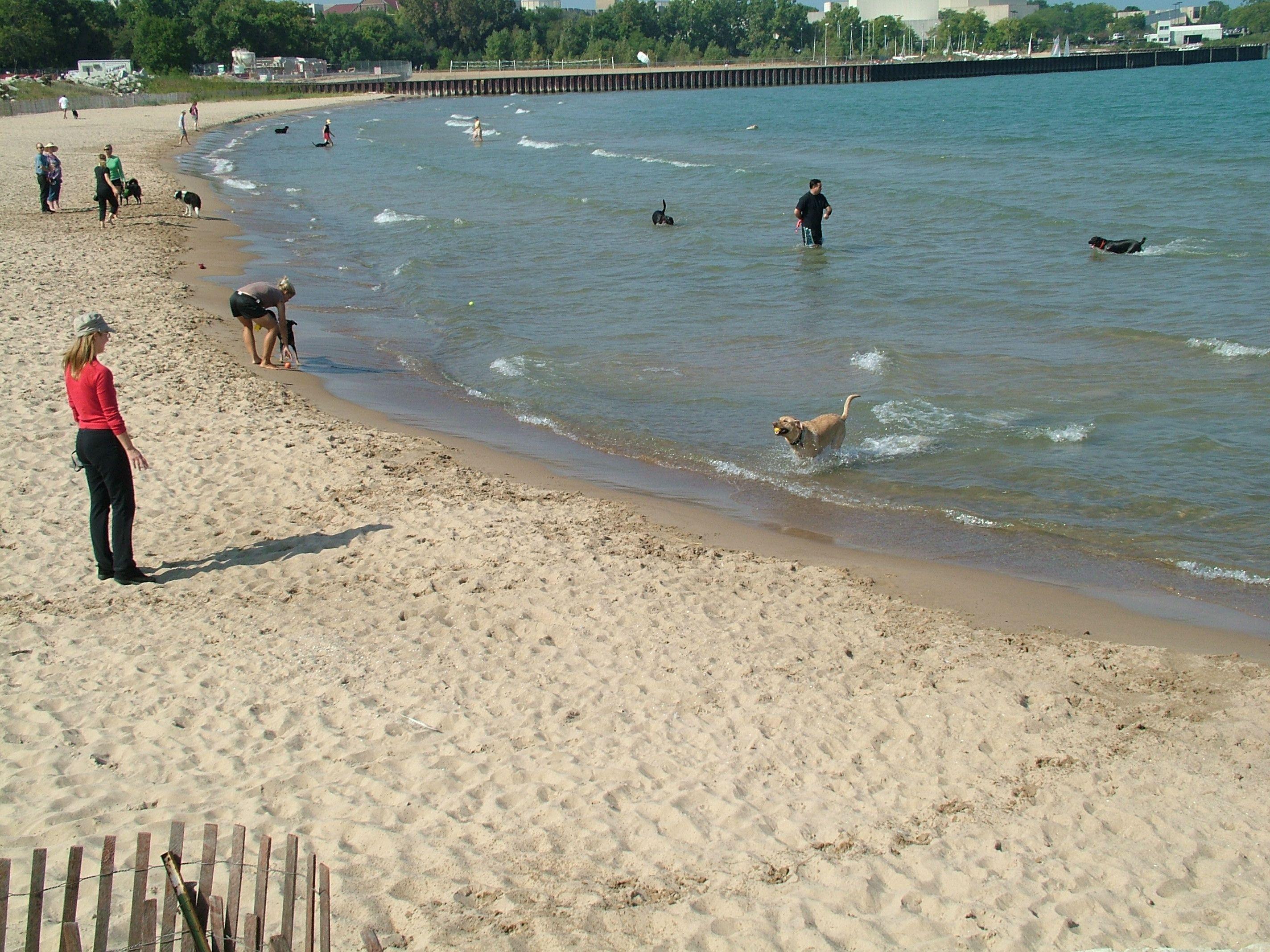 Fun at Evanston Dog Beach | Chicago | Dog beach, Evanston