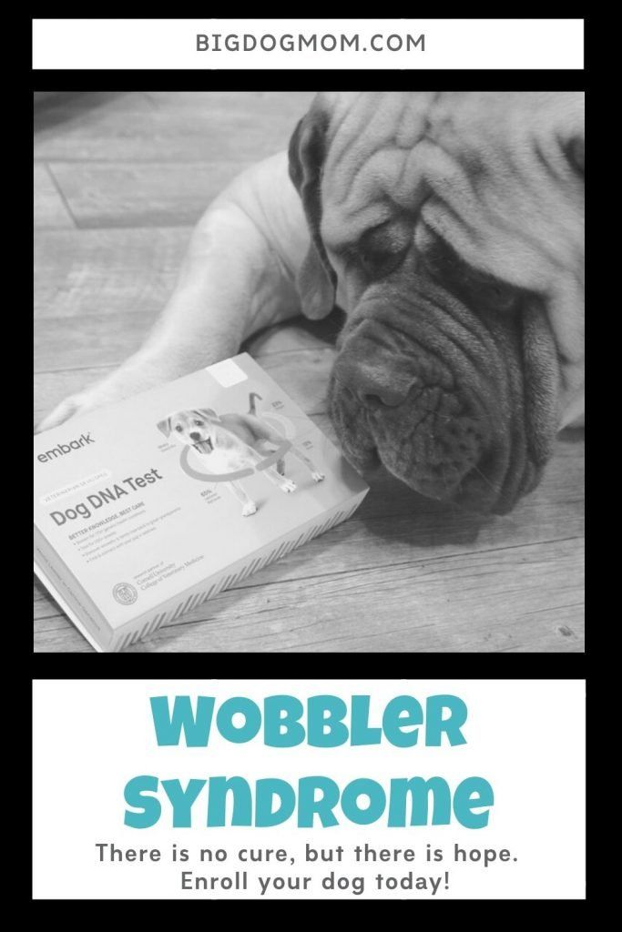 New Embark Vet Research And The Future Of Wobbler Syndrome In Dogs