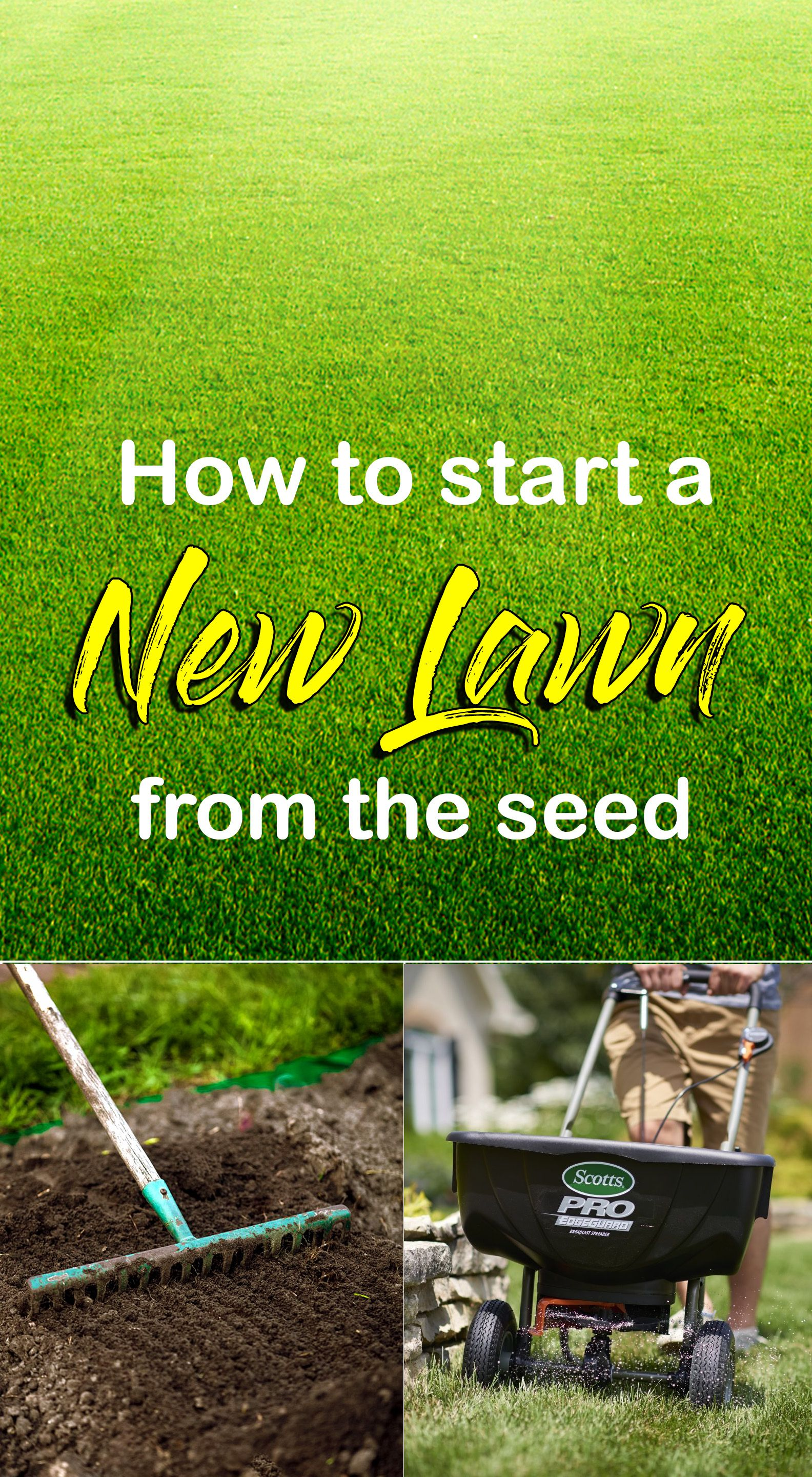 How To Start A New Lawn From The Seed Growing Lawn Seeding Lawn Best Grass Seed Lawn