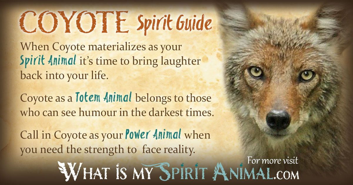 Coyote Symbolism Meaning I Am Pinterest Power Animal