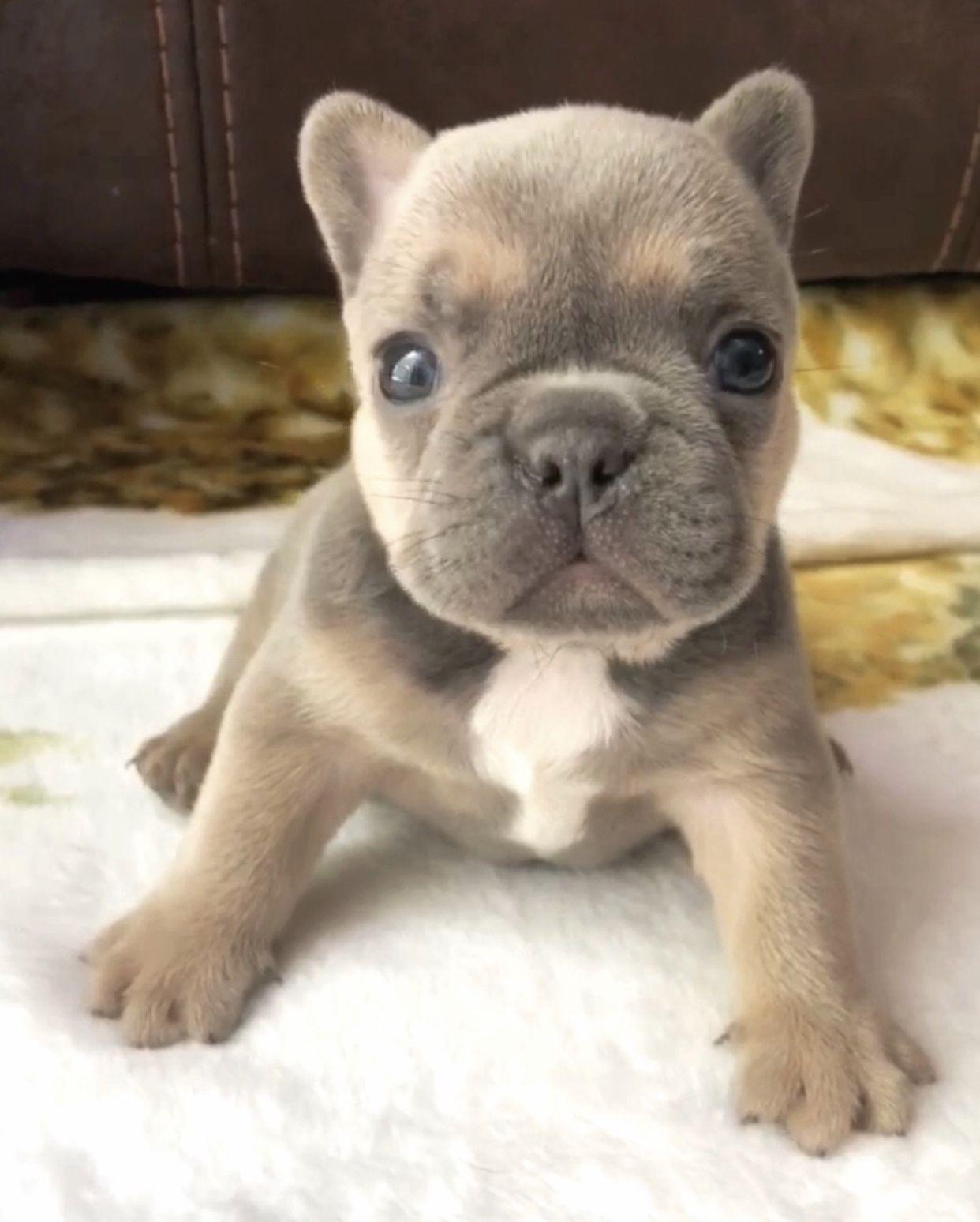 Micro Mini Out Of Square Www Poeticfrenchbulldogs Com