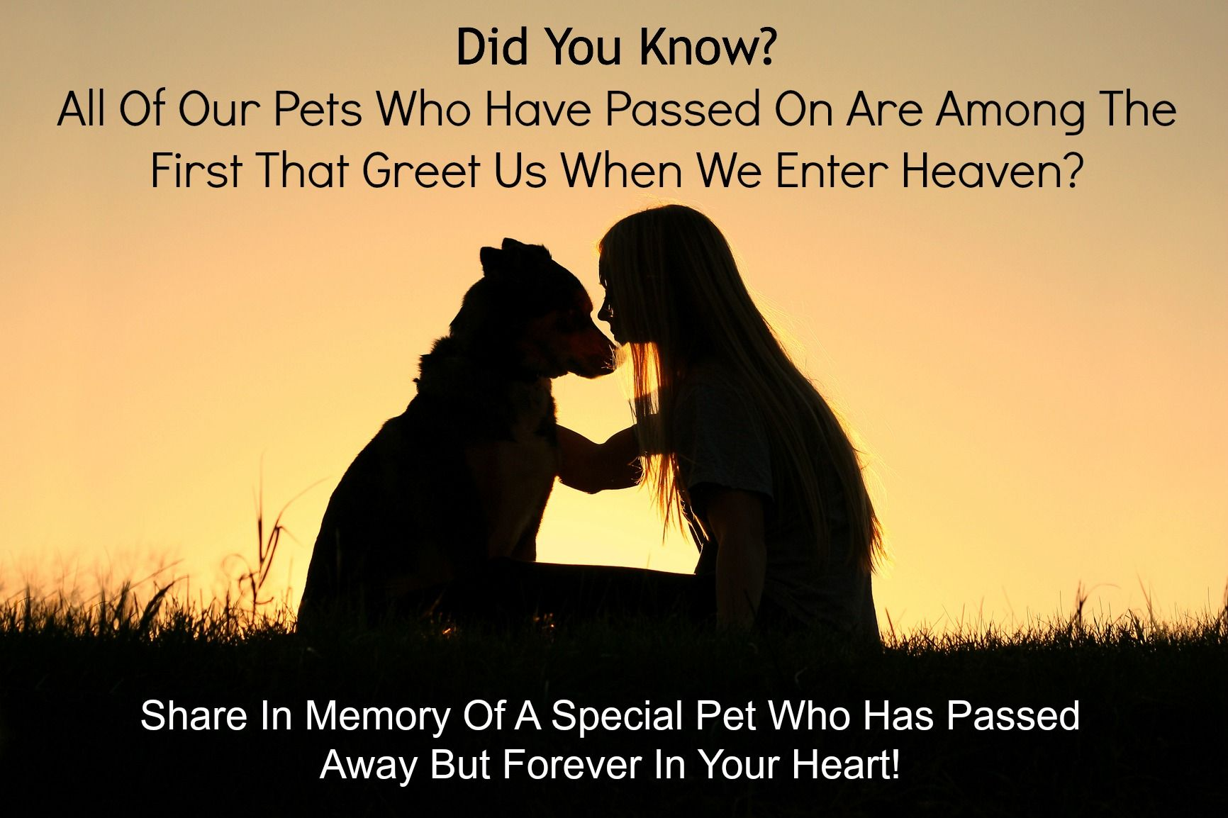 Its True All Pets Go To Heaven And They Are Among The First To Greet Us When We Make Our Transition It Is Amazing Tha Animals Dog Photoshoot Dog Body Language